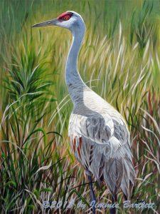 Sandhill Crane by Jimmie